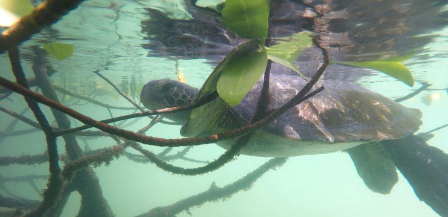 Paisajes e historias de la naturaleza colombiana en Animal Planet