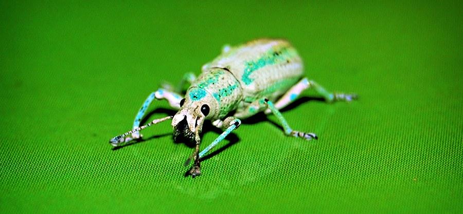 Hongos que comen insectos mejorarán producción de cítricos
