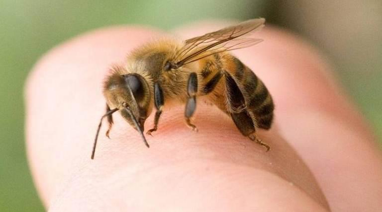 Se alborotaron las abejas en Cali