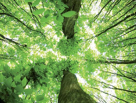 Plantar más árboles, no es necesariamente una