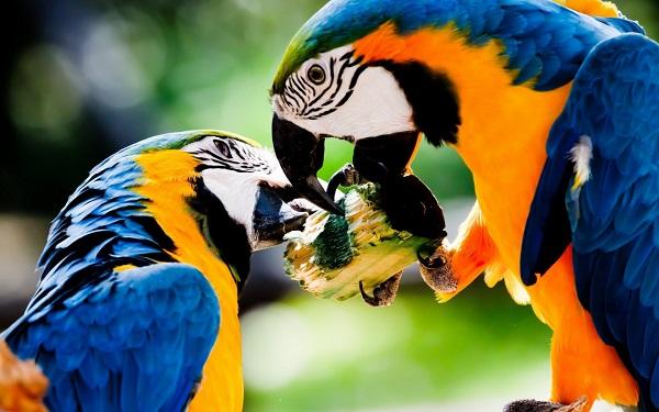 Biodiversidad amazónica y sus colores, a través del lente ciudadano