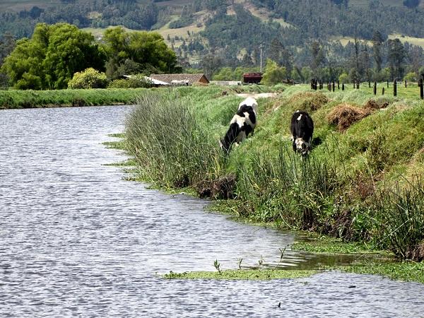Foto 11 ganadería en Fuquene