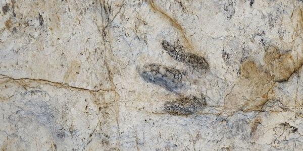 Descubren huellas fósiles del reptil que antecedió a los dinosaurios y cocodrilos