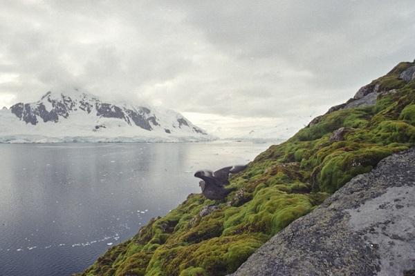 Los ecosistemas terrestres de la Antártida están cambiando rápidamente
