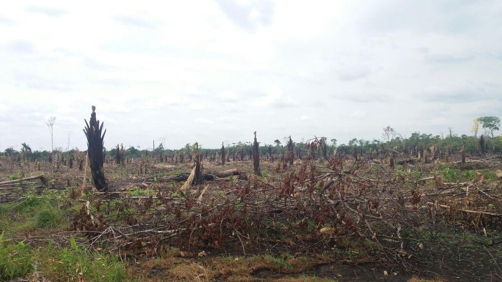 Arrasaron con más de 30 hectáreas de morichales en Arauca