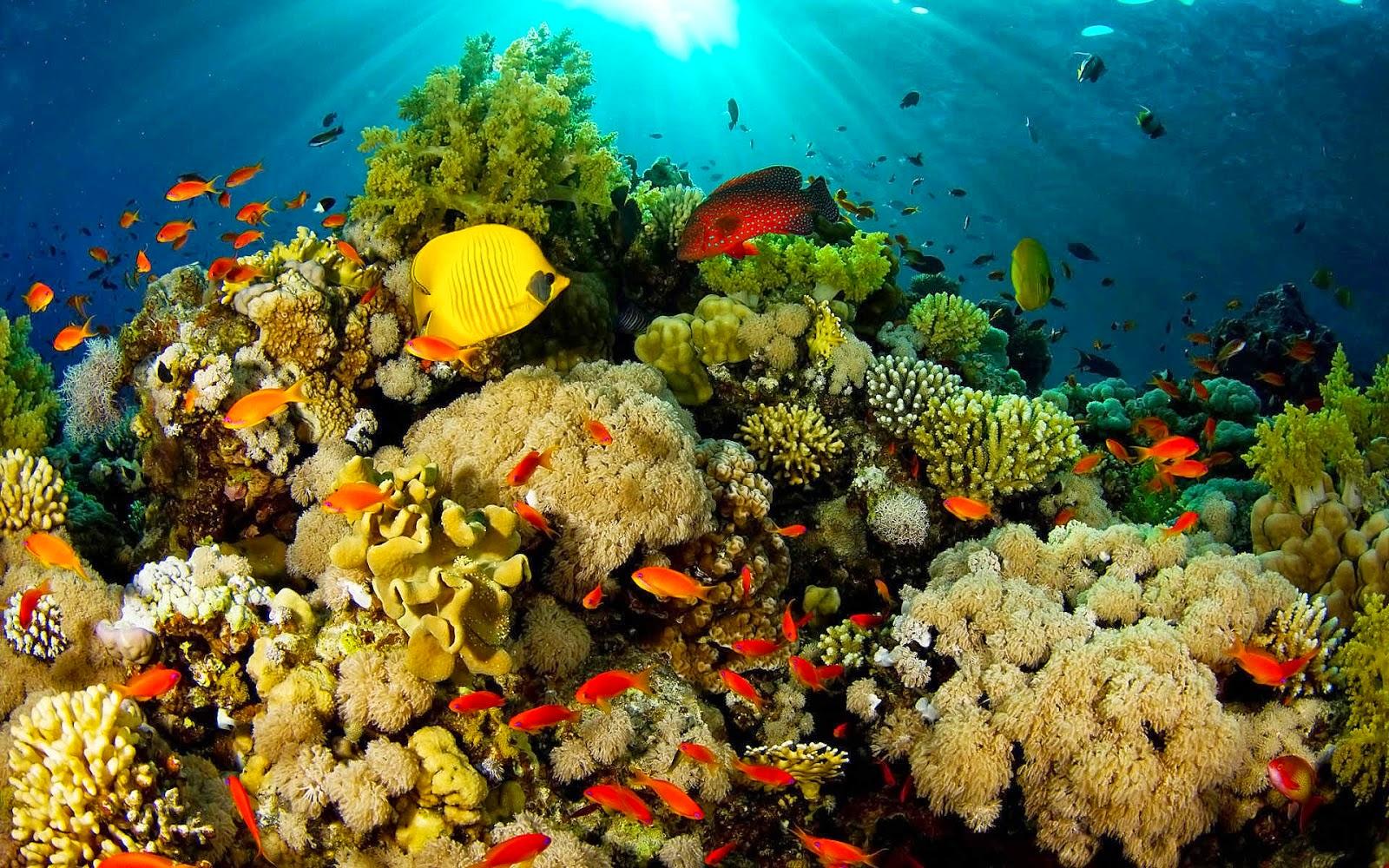 Arrecifes de coral en las Islas del Rosario estarían siendo destruidos con  dinamita