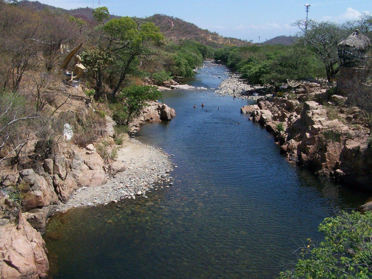 Utilizarán árboles milenarios para reforestar orillas del río Cesar